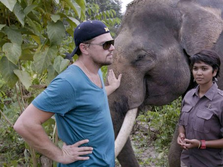 before-the-flood-leonardo-dicaprio-elephant