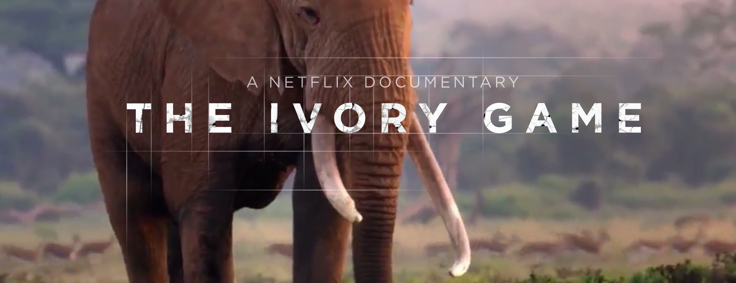 netflix-the-ivory-game