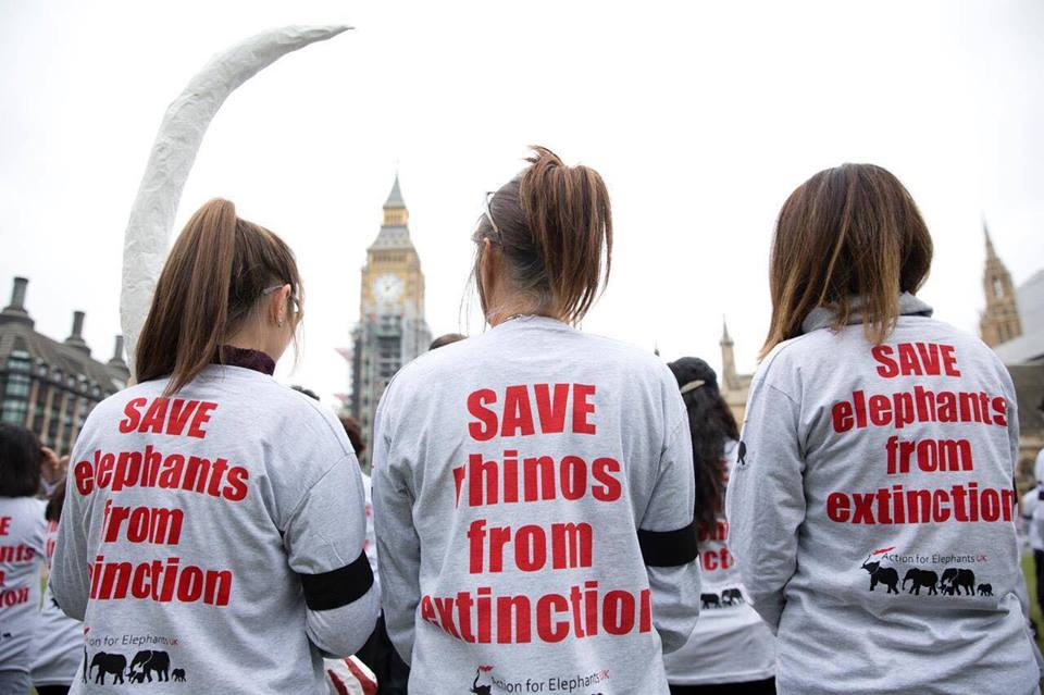 saveelephants